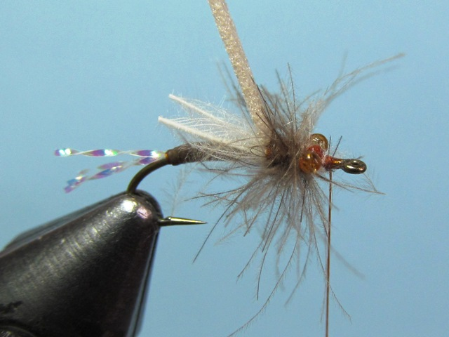 WING BUD EMERGER
